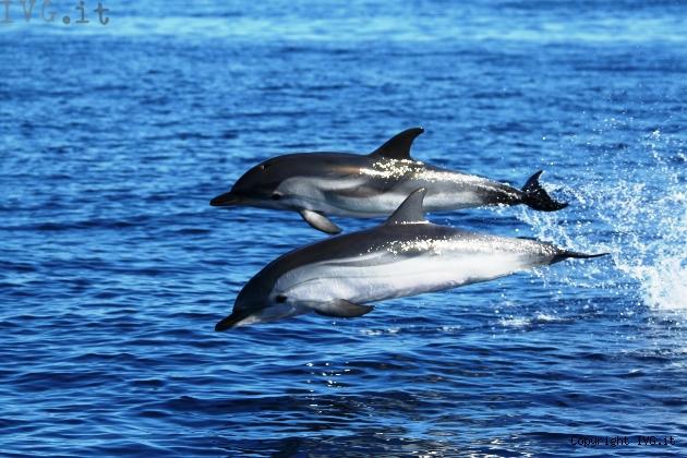 Santuario dei cetacei - Promozioni Offerte Cosa Fare a Loano