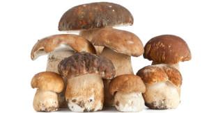 funghi-550x300